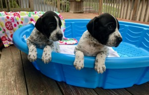 NED and NORA in pool without water