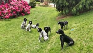 all dogs in yard 2017_LI