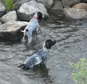 Dart & Daphne Swimming